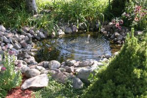 backyard-pond