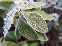 shrub winter