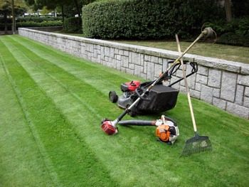 lawn clean up